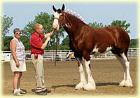 2010 Halter Class Results