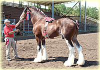 2011 Halter Class Results