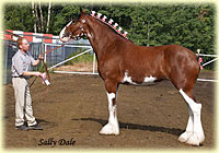 2009 Halter class results