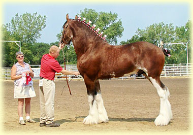 Madsen's Rising Tide - Grand Champion Stallion