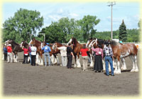 2013 Halter Class Results
