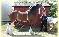 2015 Halter Class Results